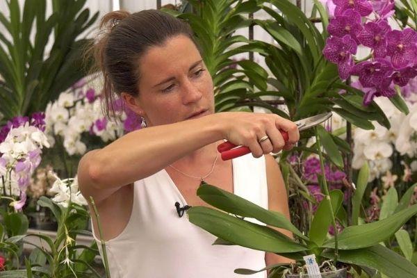 Cómo curar las orquídeas