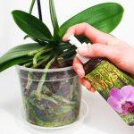 Como fertilizar las orquideas