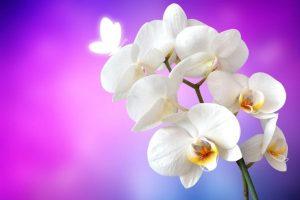 Significado de las orquideas