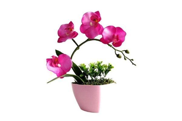 Macetas para orquideas Phalaenopsis