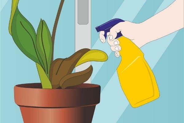 Cuidado de las orquídeas em maceta
