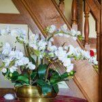 Como cuidar orquideas en interiores.jpg