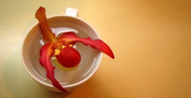como salvar una orquidea que se esta secando